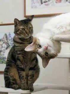 Главная - Мусяка - Все о кошках