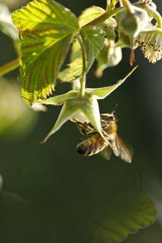 #bee Bee, Photo And Video, Instagram