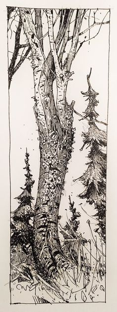 "Ian McQue on Twitter: ""tall trees https://t.co/cboYo40jUC"""