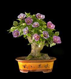 Hibiscus syriacus - bonsai