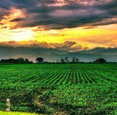 Mi Valle del Cauca #Valle #ValledelCauca