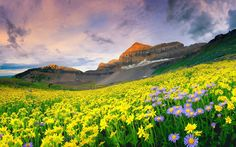 Valley of Flowers National Park - India