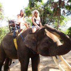 elephantride( #elephantride ) Social Media photos and videos