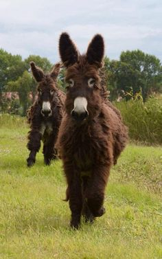 If you wonder what a donkey can eat, you can find all important feeding facts here. Take good care of your donkey with best information. Cute Donkey, Mini Donkey, Cute Sheep, Cute Baby Animals, Farm Animals, Animals And Pets, Funny Animals, Most Beautiful Animals, Beautiful Horses