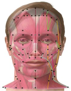Meridians of the Face