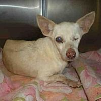 Adopt A Pet :: A757925 - Austin, TX Save this sweetheart! He needs a home!