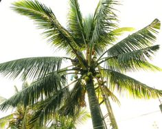 """Coconut Tree"" (2014) by Dietmar Scherf #art #vacation #island #beach #interiordesign"