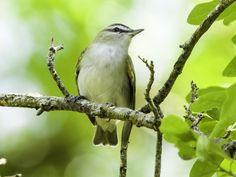 Mississippi's songbirds deserve Grammy awards