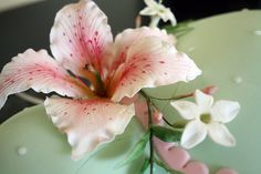 Close-up of gum paste Stargazer Lilly | Flickr - Photo Sharing!