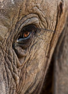 Elephant Eye, Elephant Canvas, Little Elephant, African Elephant, African Animals, Elephant Photography, Animal Photography, Wildlife Photography, Animals And Pets