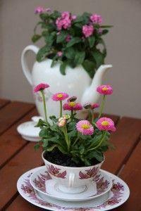 Upcycle coffee service - Altes Kaffeegeschirr in neuer Funktion: als dekorative Pflanzschalen im Garten
