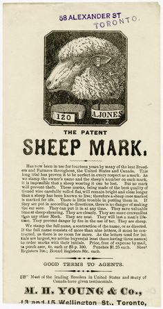 Harkening back to a very different Toronto, this advertising flyer from 1887 proposes a solution to the perhaps common threat of Wandering Sheep. At pains to explain that it might not work if your sheep has been stolen, it also extolls the great durability and reliability of the Sheep Mark. The company was located in the beating heart of sheep country: Wellington St.,  just west of Yonge.