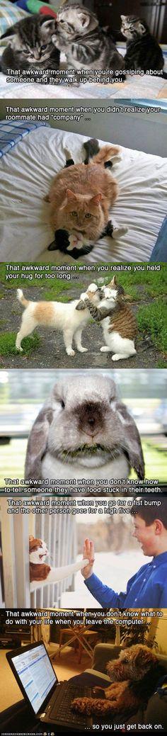 Awkward Animal Moments