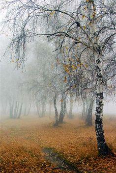   Harvest Season   {Autumn In The Country} ~ღஜღ~ cM