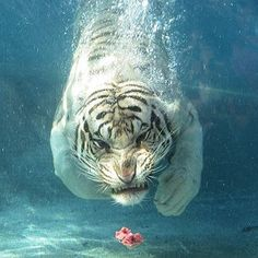 #animals #animal #toptags #wildlife #nature #tagsta #tagsta_nature #instalife #dayshots #wild #natgeohub #igs #instanature #awesome_shots #nature_shooters #vida #fauna #animalsofinstagram #animali #naturaleza #natura #tagstagramers #instanaturelover #ilove #instagood
