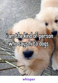 Every time! Share if you are this kind of person, too! #dogs #doglovers #puppies