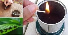 Repel Mosquitos with Coffee Grounds Wasp Deterrent, Insect Repellent, Lawn Fertilizer, Fertilizer For Plants, Repelir Mosquitos, Mosquito Protection, Uses For Coffee Grounds, Diy Upcycling, Household Chores