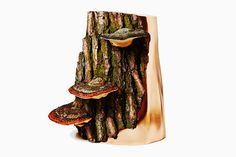 azuma makoto debuts fungi sculptures with early botanical works at chamber
