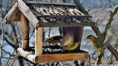 If you install bird feeders, birds will eventually visit your yard. Make A Bird Feeder, Bird Feeders, Bird Suet, Bird Tables, Lots Of Cats, Kinds Of Birds, Wooden Bird, Nesting Boxes, Backyard Birds