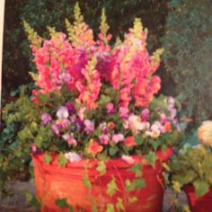 Featured potted arrangement in March Southern Living. Snap dragons, pansies, and trailing ivy.