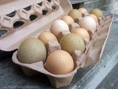 How to Get More Money For Your Eggs - Photo by Lisa Steele (HobbyFarms.com)