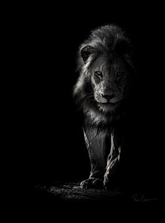 View Ross Couper's Wildlife in Black and White Photography Gallery captured in Africa
