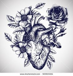 Vector Hand Drawn Illustration in Vintage Style. Design for Your TBy moopsi Blooming Anatomical Human Heart. Vector Hand Drawn Illustration in Vintage Style. Design for Your T-moopsi-Art Print Bild Tattoos, Body Art Tattoos, New Tattoos, Sleeve Tattoos, Tatoos, Real Heart Tattoos, Human Heart Tattoo, Human Heart Drawing, Realistic Heart Tattoo