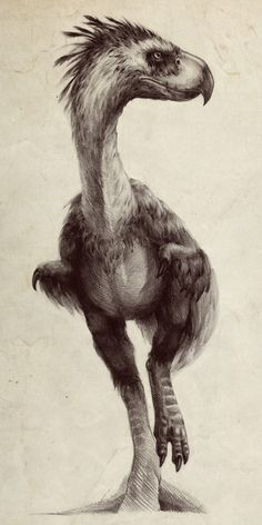 Prehistoric terror bird