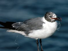 Ocean, Pollution, and Seabirds. Please, pick up any hooks and fishing line along the way.