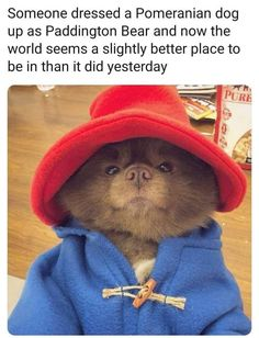 """29 Funny Memes & Pics To Help Wile Away The Hours - Funny memes that """"GET IT"""" and want you to too. Get the latest funniest memes and keep up what is going on in the meme-o-sphere. Funny Animal Memes, Funny Animal Pictures, Funny Dogs, Funny Memes, Memes Humor, Cats Humor, Funny Kitties, Puns Jokes, Grumpy Cats"""