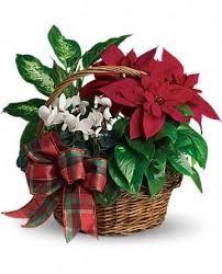 Resultado de imagen de cestas plantas naturales