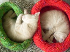 "baby Cat Brothers checking out ""sleepability"" in yarn baskets made from loopweaving."