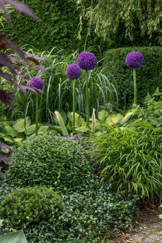 Love arrangements of green growers with a pop of color Love Garden, Shade Garden, Dream Garden, Garden Art, Garden Design, Garden Cottage, Allium Flowers, Planting Flowers, Garden Bulbs