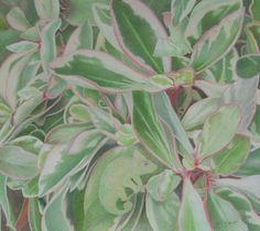 """Hide in Plain Sight"" Can you spot the chameleon? Colored Pencil by Mary K Hyatt www.marykhyatt.com"