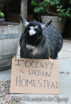 any animal, especially barnyard, wearing a sign is golden.