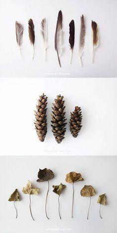 feathers, pine cones, leaves > seasonal