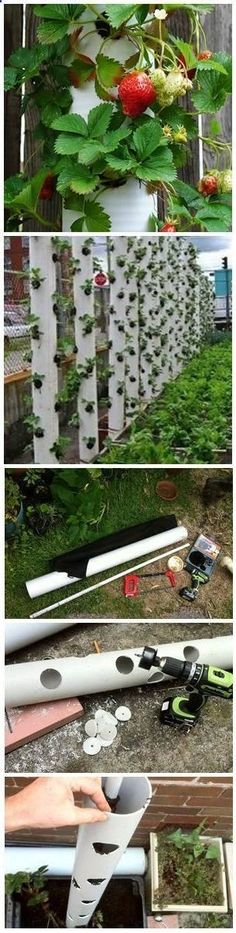 Aquaponics System - How to Make a Vertical Strawberry Tube Planter | yard garden Break-Through Organic Gardening Secret Grows You Up To 10 Times The Plants, In Half The Time, With Healthier Plants, While the Fish Do All the Work... And Yet... Your Plants Grow Abundantly, Taste Amazing, and Are Extremely Healthy