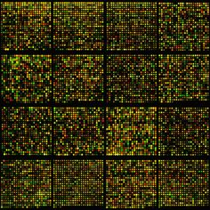 microarray of mouse genes