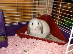They can even be taught to use a litter box. 21 Reasons Why Bunnies Are Actually The Best Pets Mini Lop Bunnies, Dwarf Bunnies, Baby Bunnies, Adorable Bunnies, Bunny Rabbits, Bugs Bunny, Rabbit Litter Box, Pet Rabbit, Angora Rabbit