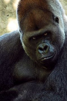 Really?? You ate the last banana?