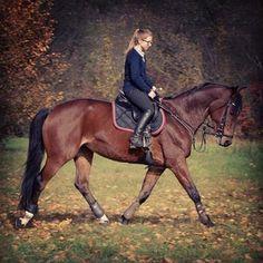 Instagram photo by marcelinamatyszczak - #mam #najlepszego #konia #na #świecie #Anabelle