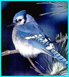May the bluebird of happiness.....