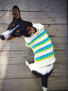 Crochet Dog Sweater Husky Little Dog Unique by DesignsbyPolina