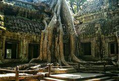 https://flic.kr/p/rLkbxZ | Anchor Wat, Temple, Cambodia.