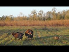 Hunting 101: Spring Gobblers - YouTube