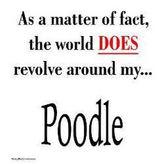 As a matter of fact, the world DOES revolve around my Poodle