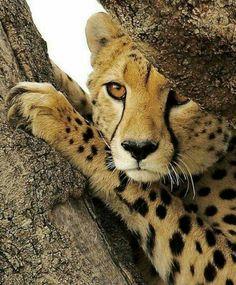 African Wild Life