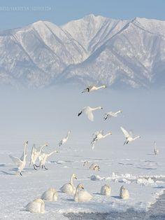 Serenity In White by Marsel van Oosten