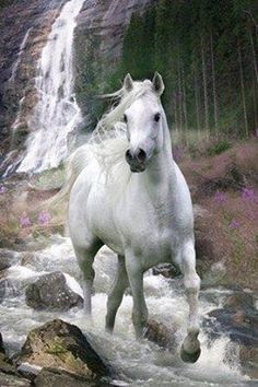 Imagen de horse, animal, and beautiful