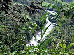 The Jungles of Pedro Vicente Maldonado